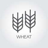 Ear of wheat outline icon. Agriculture and harvest concept. Design element for beer theme, different packaging and products. Vecto. R illustration Stock Photos