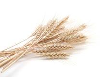 Ear of wheat on white Stock Photo