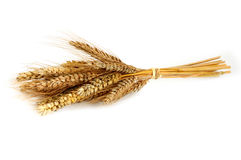 Ear of wheat on white Royalty Free Stock Images