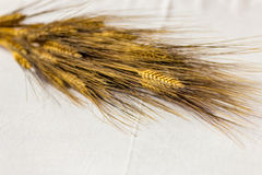 Ear of wheat on white tablecloth Stock Photography