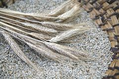 Ear of the wheat on wicker bas Stock Photography