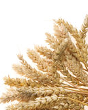 Ear of wheats on white Stock Images