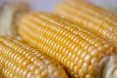 Earcorn Royalty Free Stock Images