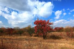 Early autum scenery at Jingpo lake world geological park 2. Every year from mid-September to early October is the optimal period for appreciating autum scene in Stock Image