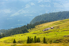 Pastures in the Alps, Switzerland Stock Image
