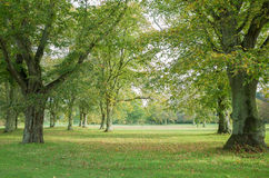 Early autumn stock photography