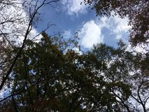 Early autumn trees, blue sky. Early autumn, blue sky. Up view on trees. Vladivostok countryside, nature in early autumn Stock Images