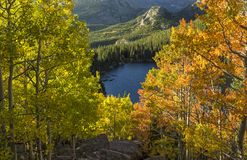 Yellow and ORange Aspens Above Bear Lake Royalty Free Stock Photo