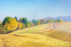 Early autumn countryside scenery in fog. Gy weather. row of trees in colorful foliage on the hill along the road. wonderful bright morning background in royalty free stock image