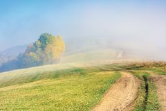 Early autumn countryside scenery in fog. Gy weather. trees in colorful foliage. country road through the hill. wonderful bright morning background in mountains royalty free stock image