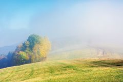Early autumn countryside scenery in fog. Gy weather. trees in colorful foliage on the hill. wonderful bright morning background in mountains royalty free stock photography