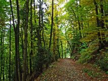 Early autumn in deciduous forests on the slopes of Alpstein mountain range and in the Rhine valley. Canton of St. Gallen, Switzerland stock image