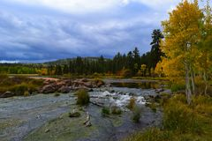 Early autumn at Duck Creek. Birch trees near a stream Royalty Free Stock Images