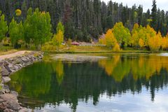 Early autumn at Duck Creek. Reflection of yellow trees in a lake. Stock Images