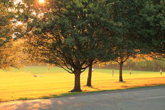 Early autumn evening in park Stock Photography