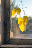 Early autumn. Early fall dry leaves view through a window Stock Photography