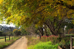 Early autumn on a farm road in South Africa Stock Images