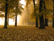 Early autumn foggy morning. In city park, Banja Luka, Republika Srpska, Bosnia Royalty Free Stock Image