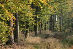 Early autumn in the forest. Edge of the woods Stock Images