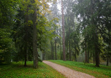 Early Autumn Forest After Rain With Mist Royalty Free Stock Photo