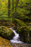 Early Autumn Forest Stock Images