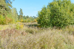 Early autumn in the forest Royalty Free Stock Images