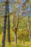Early autumn in the forest Stock Photography