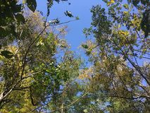 Forest, up view on trees. Early autumn forest. Nature, up view on trees. Vladivostok city Royalty Free Stock Photography