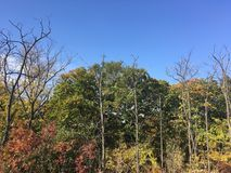 Forest, early autumn. Trees, blue sky. Early autumn forest. Vladivostok nature, bare trees Stock Photo