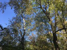 Forest, trees. Early autumn. Early autumn forest. Vladivostok nature, trees Stock Photography