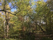 Forest, trees. Early autumn. Early autumn forest. Vladivostok nature, trees Stock Images