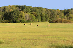 An Early Autumn Hayfield. The landscape of an early fall hayfield Royalty Free Stock Photo