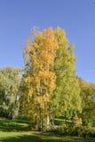 Early autumn landscape stock photos
