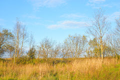 Early autumn landscape. Royalty Free Stock Photo