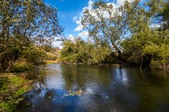 Early autumn landscape. Wild river flowing along the banks, densely overgrown with bushes and trees. Royalty Free Stock Photos