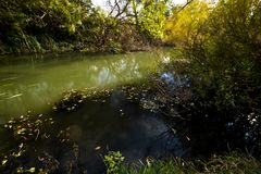 Early autumn landscape. Wild river flowing along the banks, densely overgrown with bushes and trees. Stock Image
