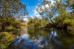 Early autumn landscape. Wild river flowing along the banks, densely overgrown with bushes and trees. Stock Images