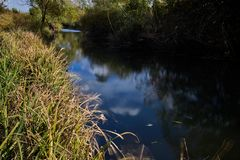 Early autumn landscape. Wild river flowing along the banks, densely overgrown with bushes and trees. Royalty Free Stock Photo