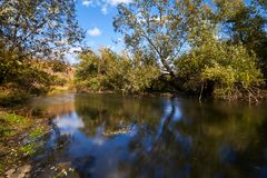 Early autumn landscape. Wild river flowing along the banks, densely overgrown with bushes and trees. Royalty Free Stock Image