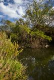 Early autumn landscape. Wild river flowing along the banks, densely overgrown with bushes and trees. Stock Photos