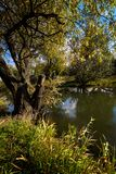 Early autumn landscape. Wild river flowing along the banks, densely overgrown with bushes and trees. Stock Photo
