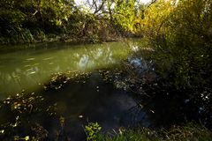 Early autumn landscape. Wild river flowing along the banks, densely overgrown with bushes and trees. Early autumn landscape. Wild river flowing along the banks Stock Photography