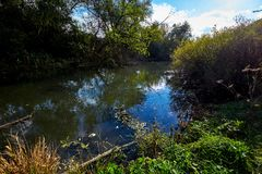 Early autumn landscape. Wild river flowing along the banks, densely overgrown with bushes and trees. Stock Photography