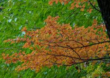 Early autumn leaves in Central Park, New York City Royalty Free Stock Photography