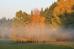 Autumn fog royalty free stock images