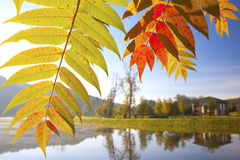 Early autumn morning Royalty Free Stock Images