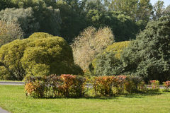 In early autumn park on sunny day Royalty Free Stock Photography