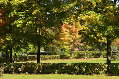 In early autumn park on sunny day Royalty Free Stock Image