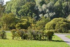 In early autumn park on sunny day Stock Photos