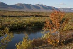 Early autumn in the Polar Urals. Sob River. Russia stock photo